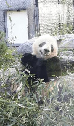 Baby Panda - soo cute!
