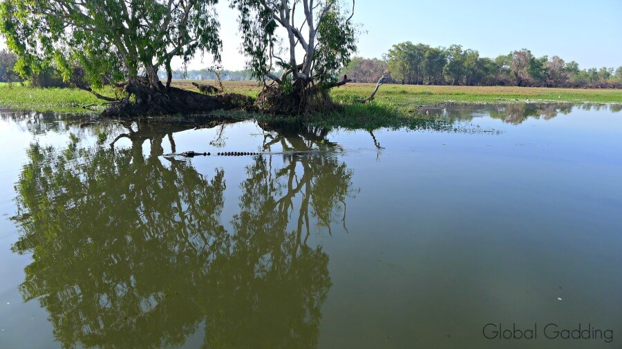 yellow water billabong scenery