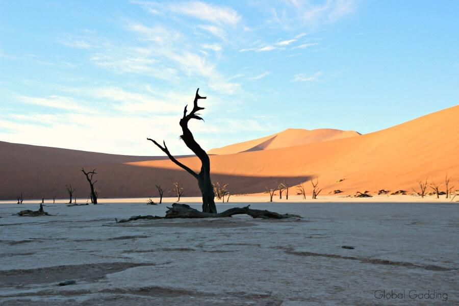 dead trees at deadvlei