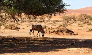 Sossusvlei Namibia – Climbing Sand Dunes To Watch Sunrise