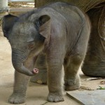 Best Ethical Elephant Encounter In Thailand At Elephant Nature Park