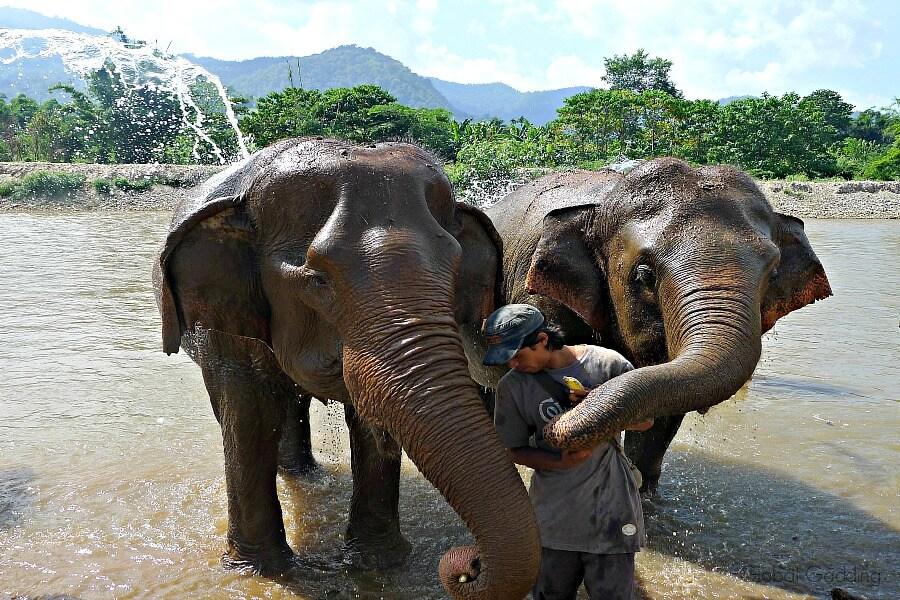 ethical elephant encounter