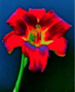 A.P. Astra Untitled Blossom e1563470903634 - A.P. ASTRA - Untitled (Blossom)