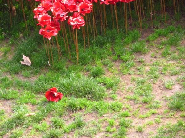 Poppy falls Photo by JMorton