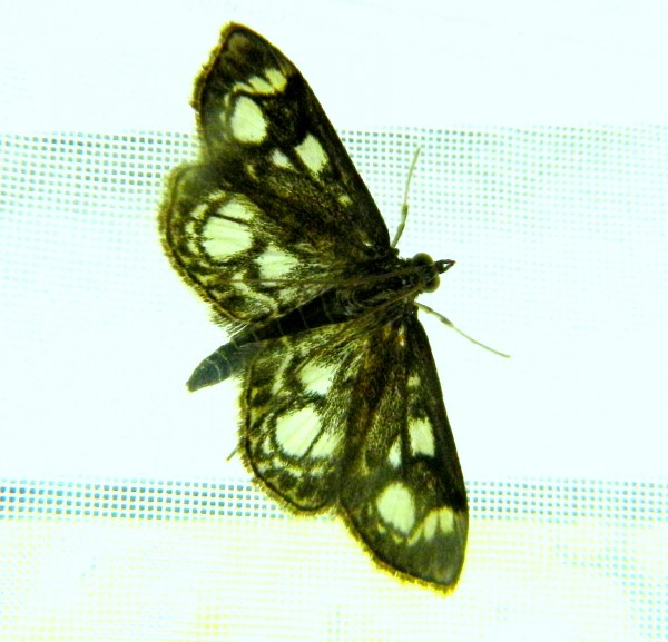 Moth on curtain