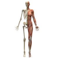 Kinesiology - What Is It?