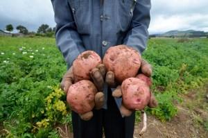 hands present vegetable - Measuring Progress