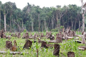 New study on drivers of illegal tropical deforestation