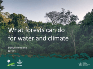 What forests can do for water and climate