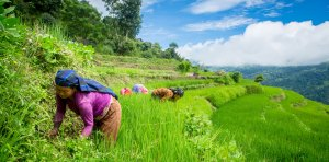 Women farmers, the unsung heroes