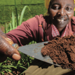 Healthy soils for productive and resilient agricultural landscapes