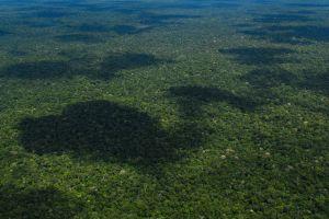 Brazil Bonn Challenge delegates evaluate forest restoration efforts worldwide