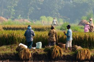 Global emissions targets in focus at rainforest summit in Indonesia