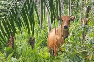 Fairventures' Borneo reforestation project seeks $17.4 million from GLF Dragons' Den