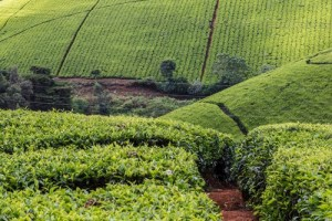 Engaging the Private Sector in Integrated Landscape Approaches: More examples from across Africa