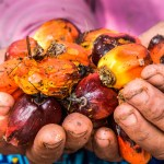 Protecting Forests in Indonesia: Legal Options in Land Zoned for Agriculture