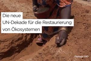 Die neue UN-Dekade für die Restaurierung von Ökosystemen