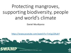 Protecting mangroves, supporting biodiversity, people and world's climate