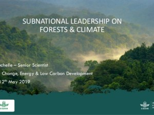 Subnational leadership on forests and climate change