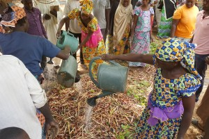 Cameroonian smallholder farmers get involved in forest landscape restoration