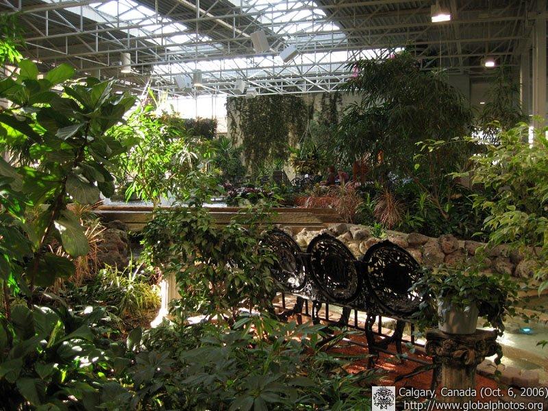 Indoor Plants Calgary