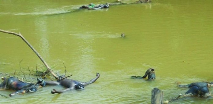 35 Dead Bodies Dropped In Ezu River In Anambra State By SARS