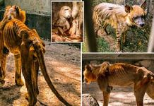 Photos Of Starving Lion And Other Animals At Gamji Gate Zoo In Kaduna
