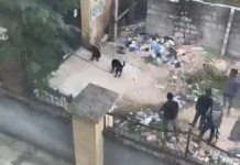 Video Of Two Rottweilers Stopping Police Officers In Owerri