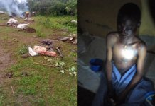 Seven Cows In Alla, Kwara Killed By Thunderstrike And Two Herders Injured