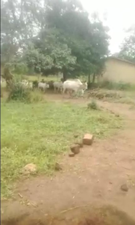 Video Of Pupils And Teachers Running As Fulani Herdsmen Invades School In Isuikwuato Abia