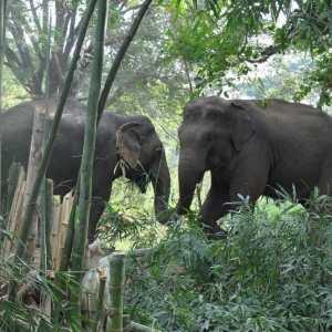 Globalteer Northern Thailand Elephant Sanctuary