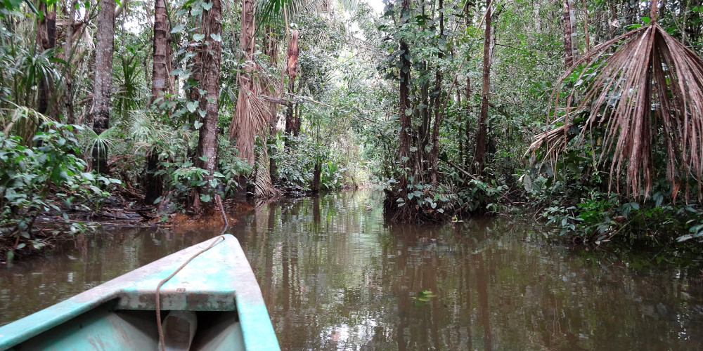 Boating through the Amazon Rainforest