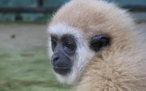 Volunteer Thailand Animal Sanctuary | Wildlife Rescue