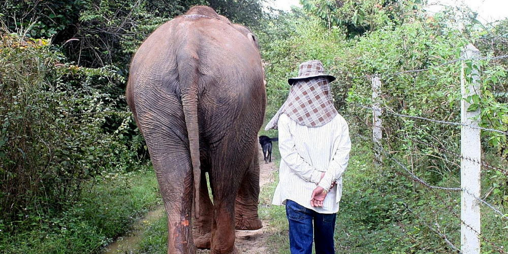 Elephant and mahout at the sanctuary