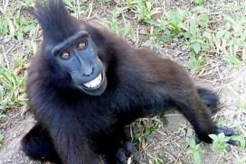 Indonesia wildlife sanctuary