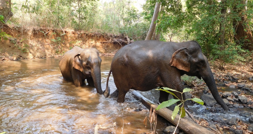 The Cambodia Elephant Sanctuary