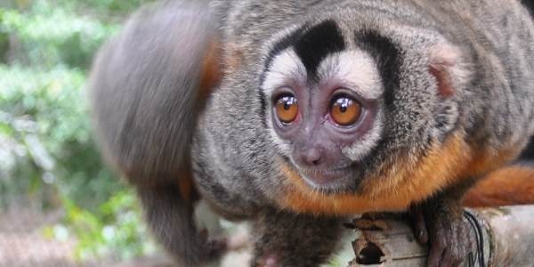 Peru Amazon Wildlife Sanctuary monkey