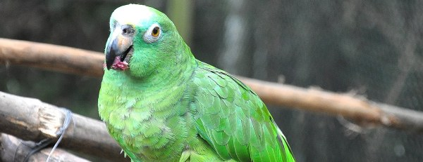 Peru Amazon Wildlife Rescue Sanctuary