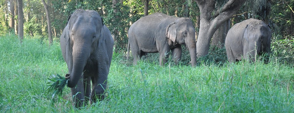 Elephants grazing at the sanctuary