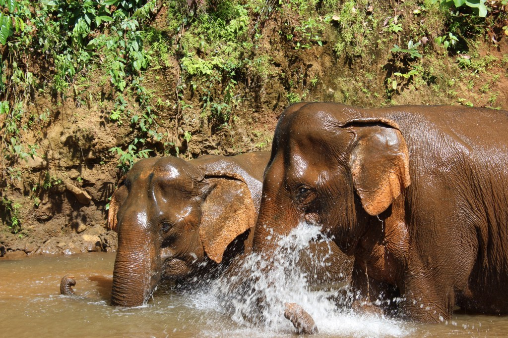 Volunteer at an Elephant Sanctuary