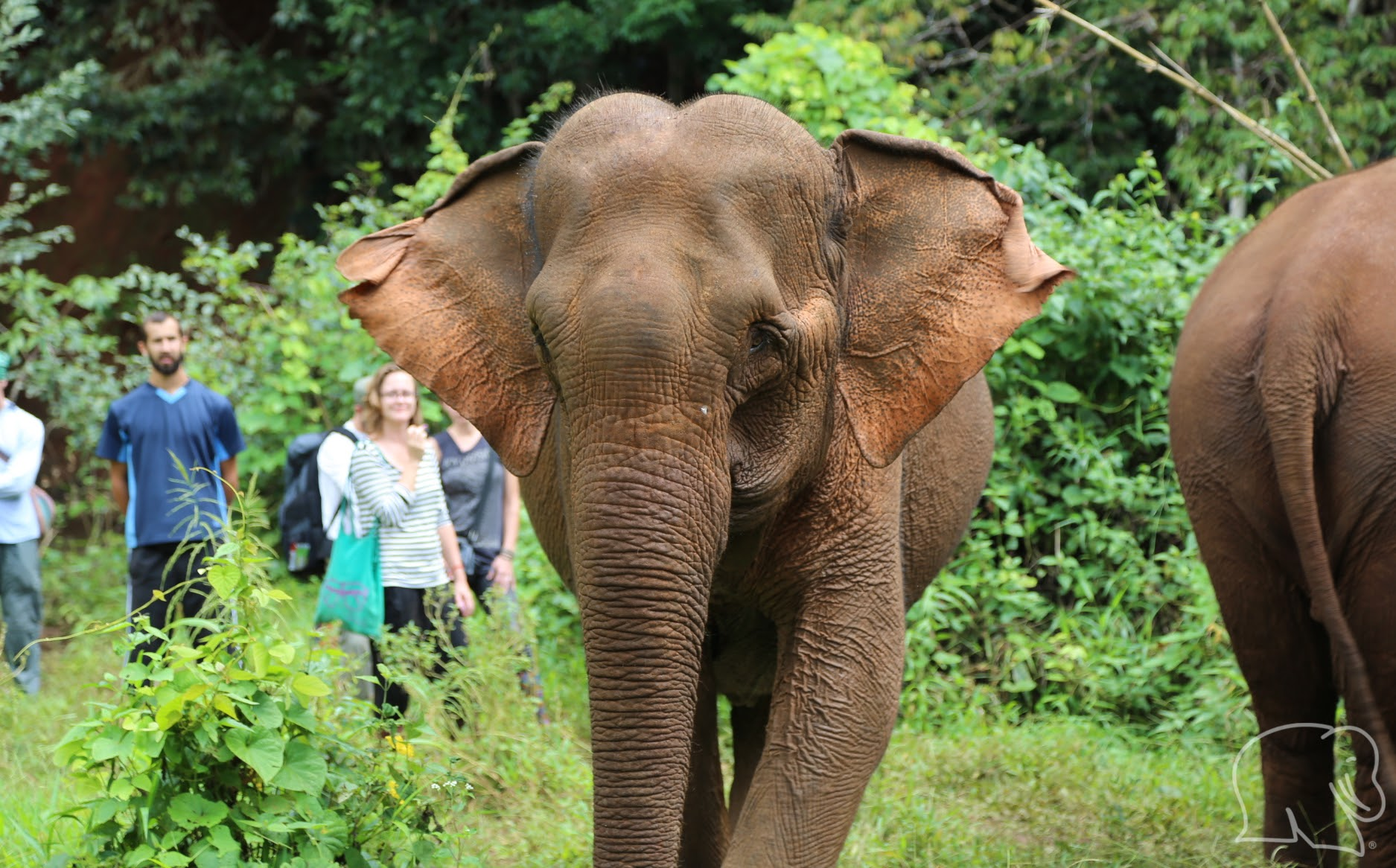 Volunteers with an elephant at the sanctuary