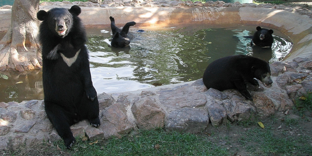 Bears at the Thailand Wildlife Sanctuary