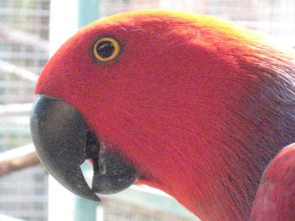 Indonesia Wildlife Sanctuary red parrot