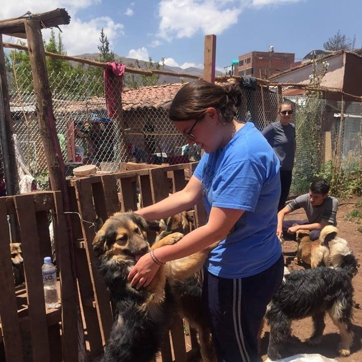 Volunteer at the Cusco Dog Shelter