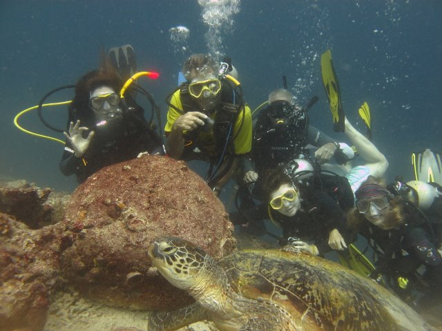Diving volunteers with turtle