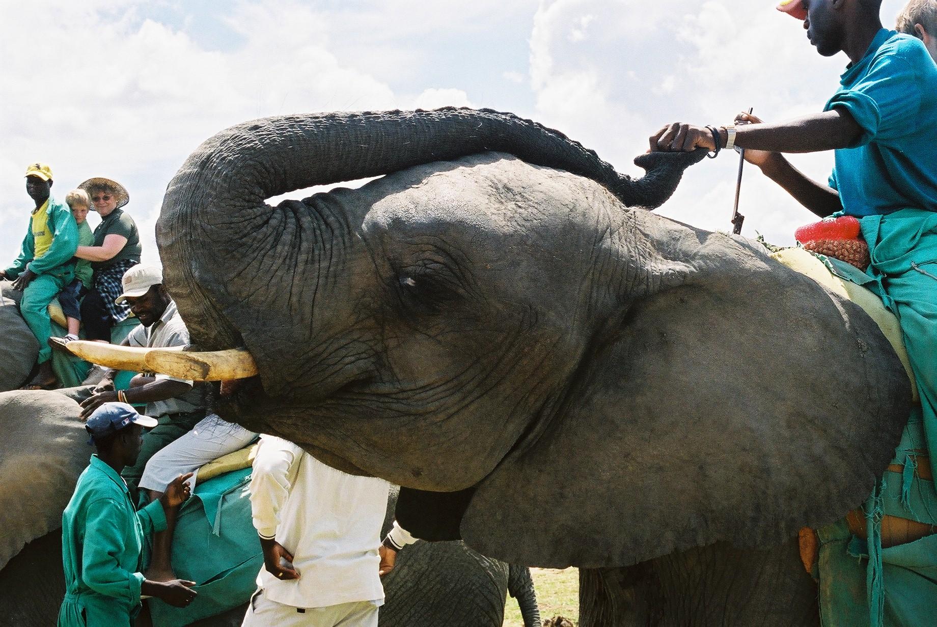 Tourists riding elephants