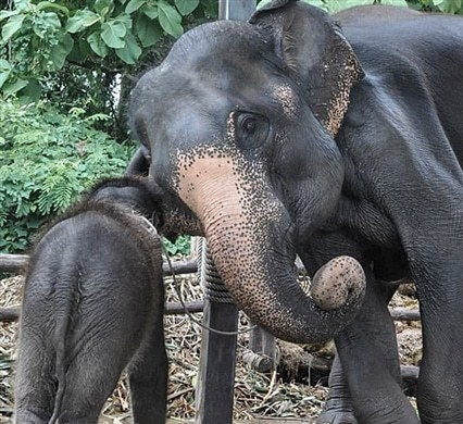 Mother and baby elephant at the sanctuary
