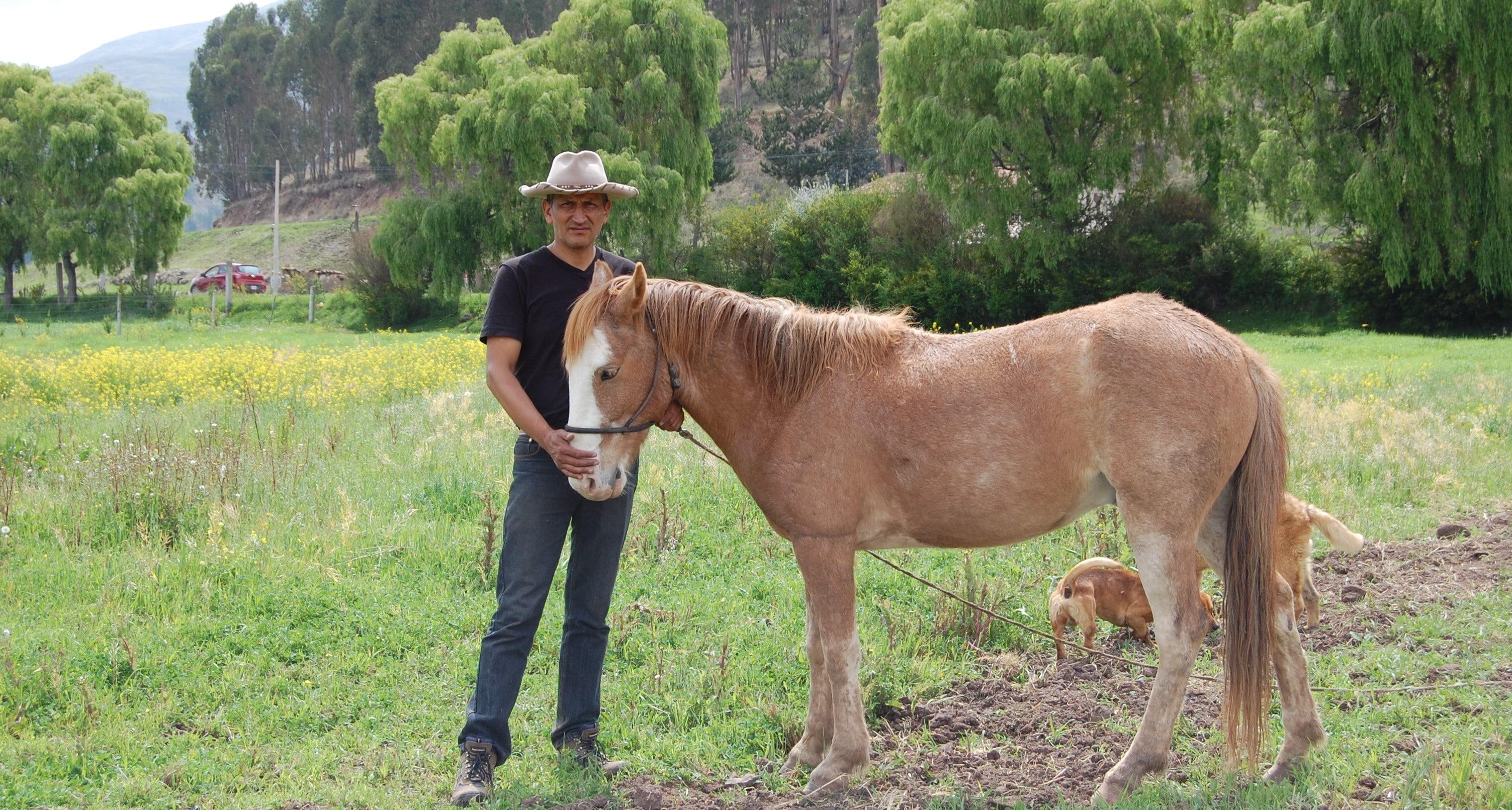 Horse Rescue Sanctuary  in Peru