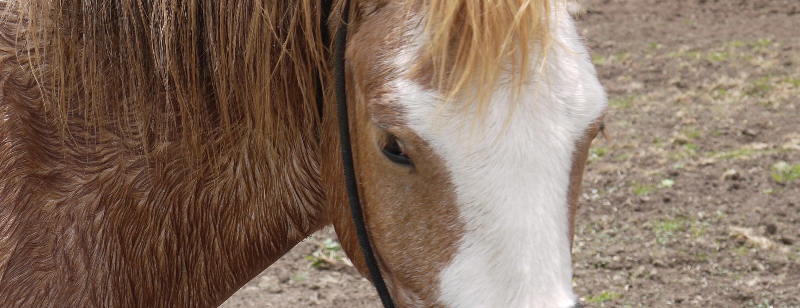 Peru Horse Shelter