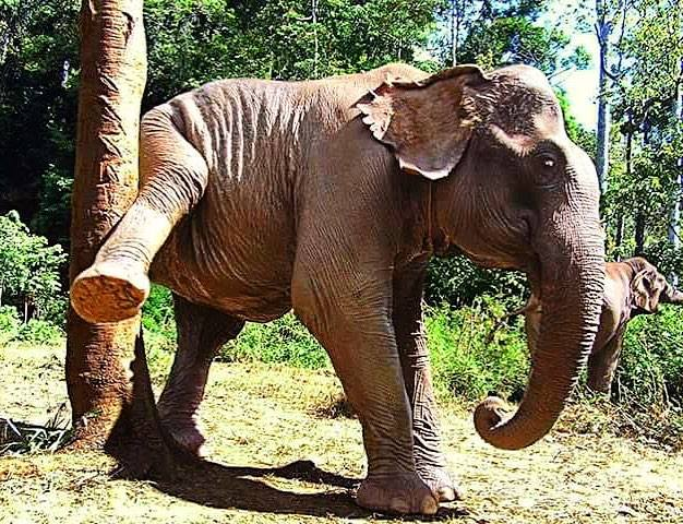 Rescued Elephant scratching that itch!